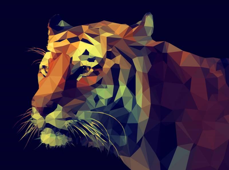 Poly tigris
