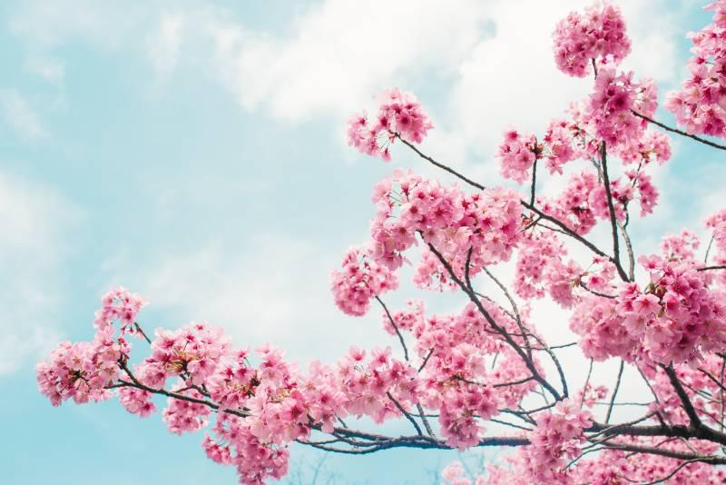 Növény-virág 20