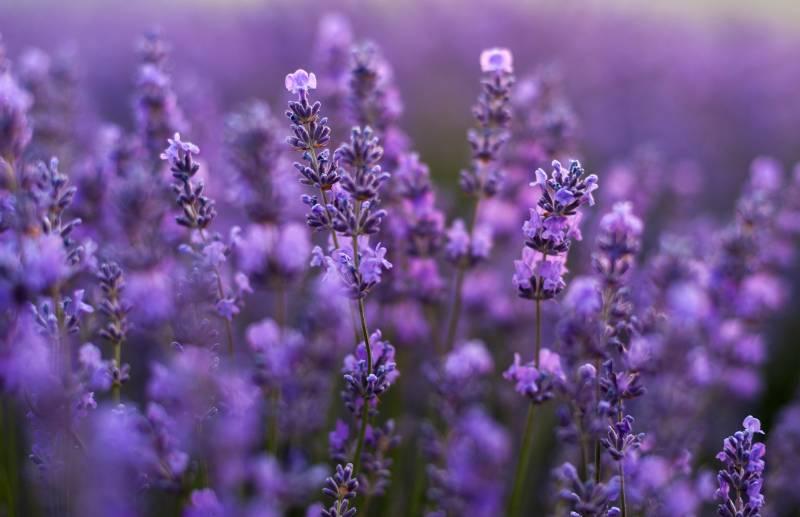 Növény-virág 21