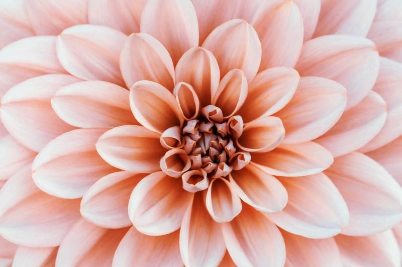 Növény-virág 24