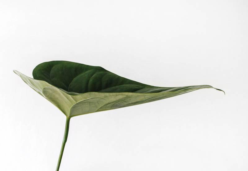 Növény-virág 25