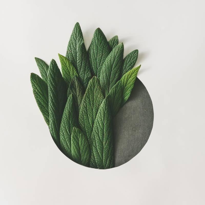 Növény-virág 03