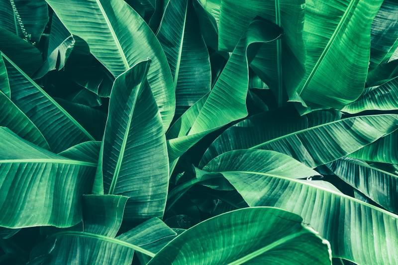 Növény-virág 08